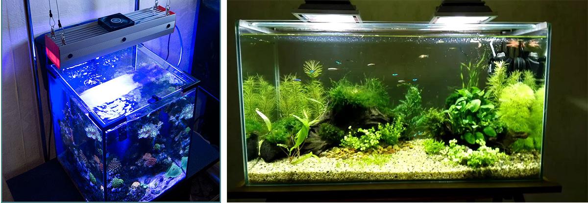 Холодное и тёплое освещение для аквариума