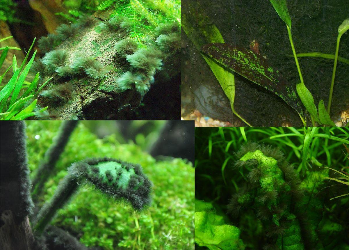 Почернение водорослей и камней