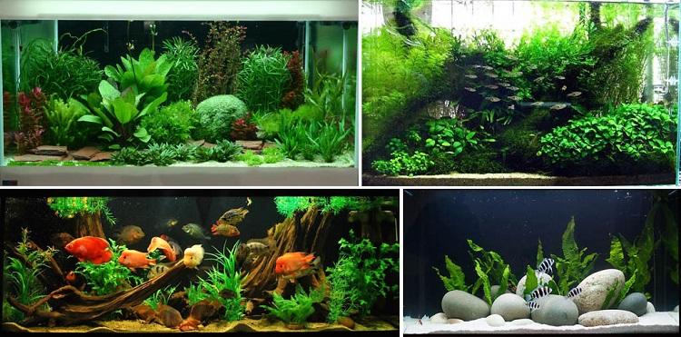 Виды биоценоза в аквариуме