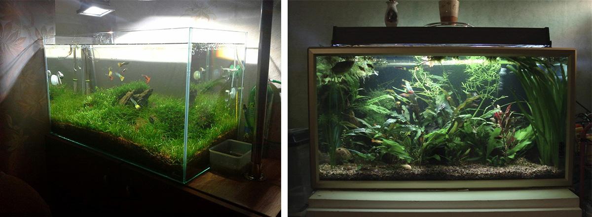 Освещение аквариума при помощи разных типов ламп