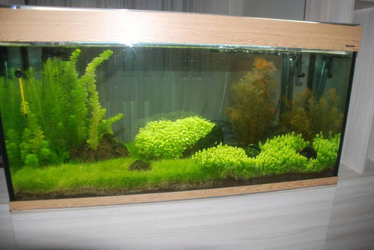 Резервуар с растениями