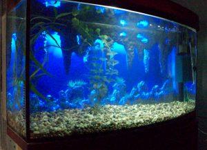 Темно-синий фон для аквариума