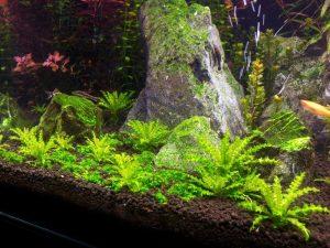 Для аквариумного растения погостемона грунт