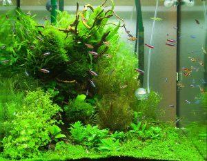 Как оформить аквариум