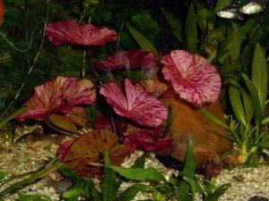 Предпочитаемый грунт для аквариумного растения