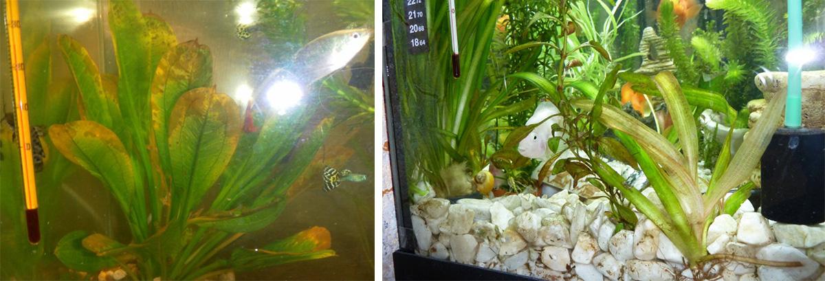 Гниение аквариумных растений