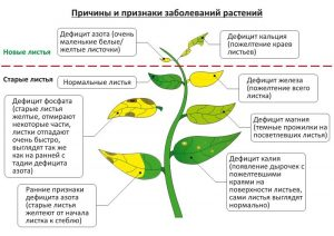 Причины заболеваний растений в аквариуме
