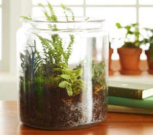 В большой высокой банке растения комнатные