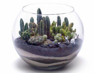 Растения подходящие для разведения за стеклом