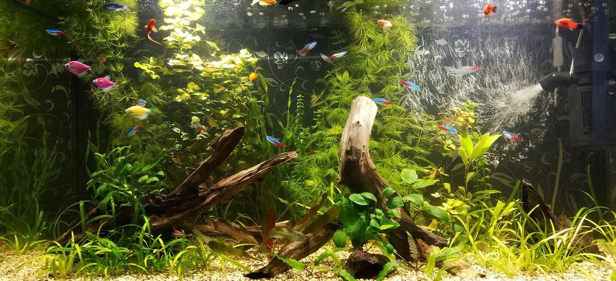 Заполнение задней стенки в аквариуме