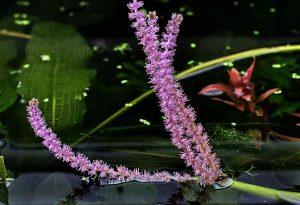 Фиолетовые соцветия