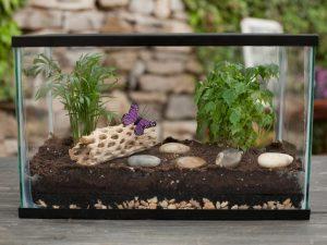 Растения в герметичном сосуде