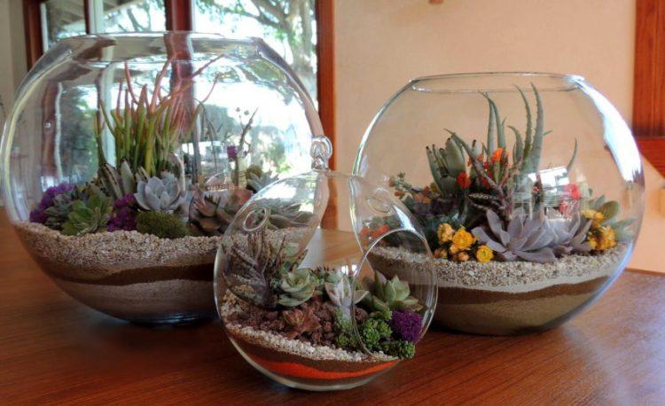 Комнатные растения в аквариуме