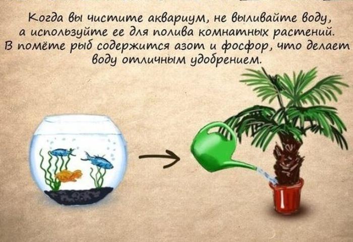 Польза для комнатных растений