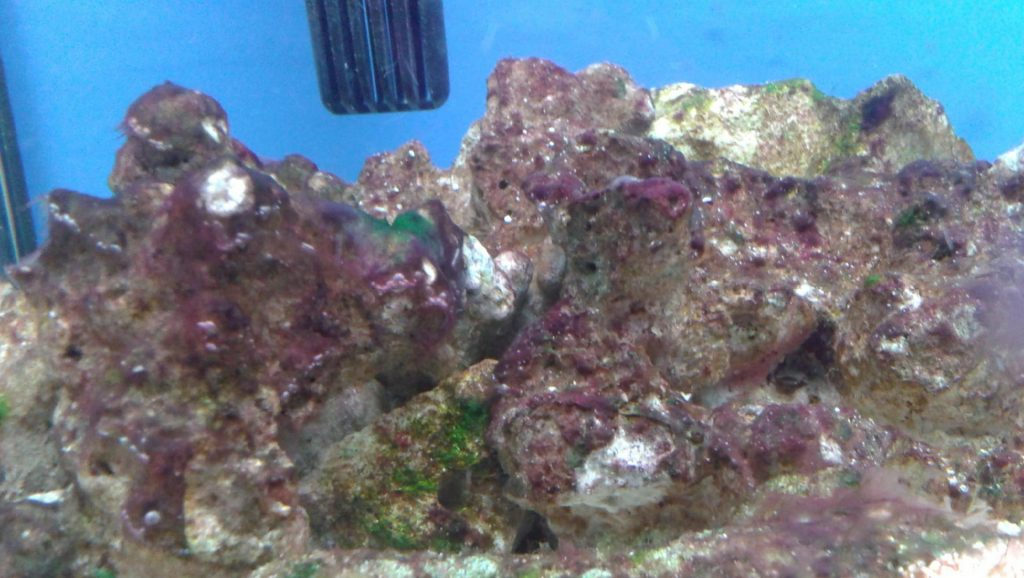 водоросли в морском аквариуме