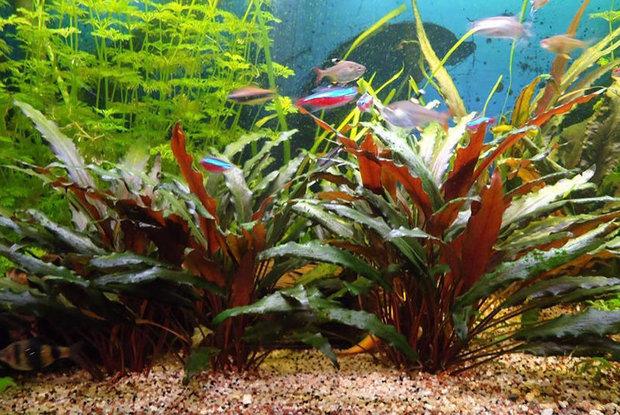 Грунт для аквраиумных растений